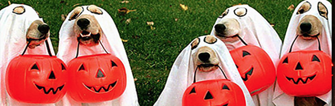 Pet Hallowen Costumes Chicago