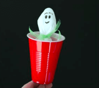 Basic kitchen supplies and a magic marker transform into this easy-to-make peekaboo ghost craft that will delight little kids with hours of pop-up action. Who needs Halloween candy when there's this to play with?